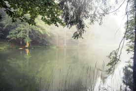 fog-1615824__480