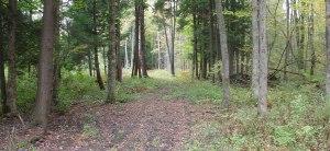 Sadie trail in the woods