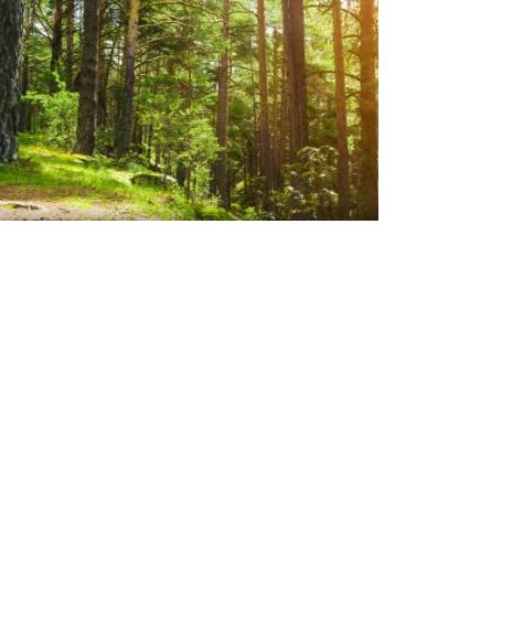 Sadies chapter 5 trail in woods.jpg