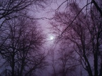 winter-203548_1280