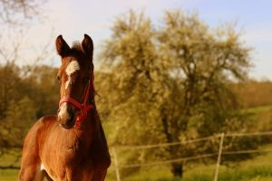 foal-1645523__480