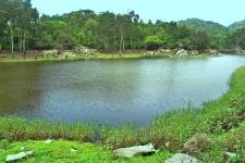forest-pond.jpg