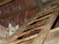 village-cat.jpg