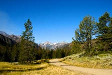 road-into-wyoming-forest.jpg