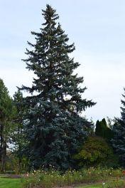 tree-199185__480