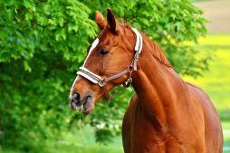 horse-2344505__480