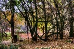 autumn-landscape-1500830694aId