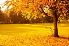 yellow-autumn.jpg