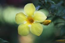 flower-2089061__480