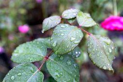 rain-1680826__480