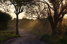 african-bush-412671__480