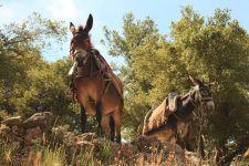 donkey-3010791__480