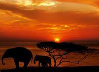 elephant-1240011__480