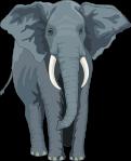 elephant-48422__480