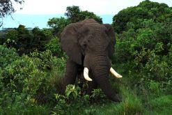 elephants-75877__480