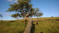 fallen-tree-889490__480