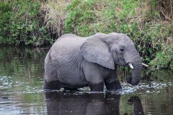 safari-285829__480