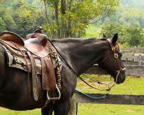 horse-176990__480