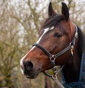 horse-2044465__480