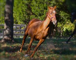 horse-running-1269621__480