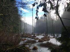 swamp-1149011__480
