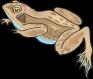 frog-46394__480