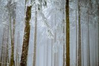 forest-2964073__480