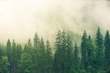 fog-3622519__480