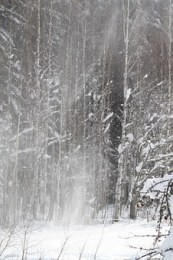 winter-58581__340.jpg