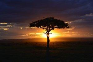 africa-3002460__340