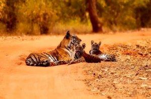 india-2361264__340