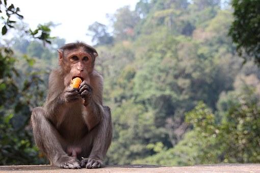 monkey-1028661__340.jpg