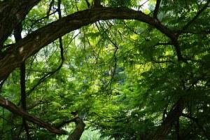 tree-141692__340