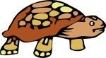 turtle-269100__340