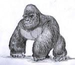 gorilla-1088582__340